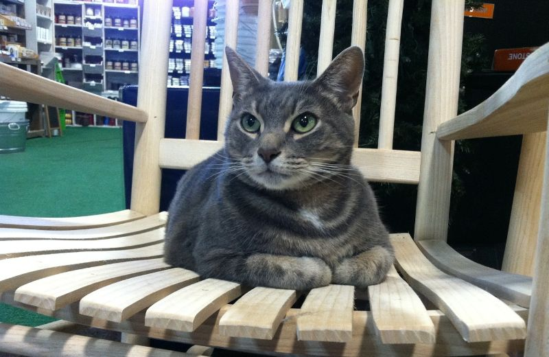 shop cat treats, cat food, cat toys, cat beds, and other cat products at planktown hardware
